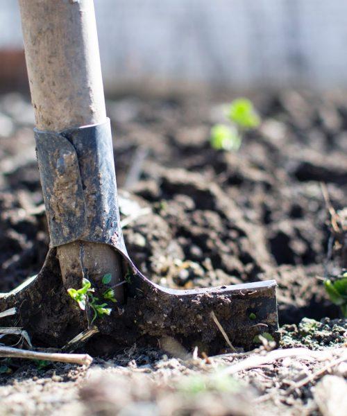 Xterieur tuinrenovatie 1